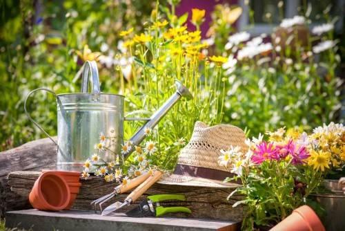 Как ухаживать за садом летом