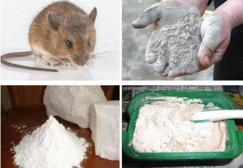 Как уничтожить крыс в частном доме