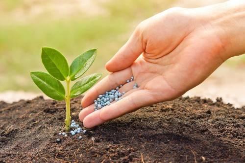 Какие бывают удобрения для сада и огорода