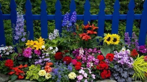 Какие цветы цветут все лето на даче