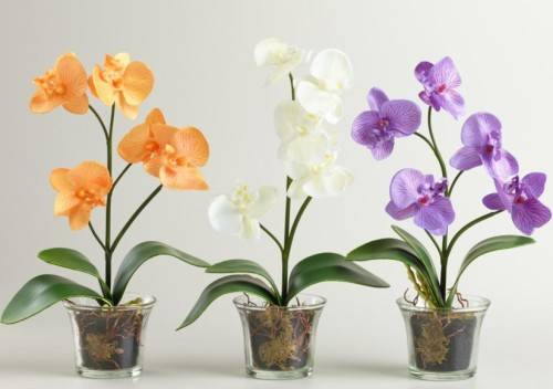 Какой грунт нужен для орхидей