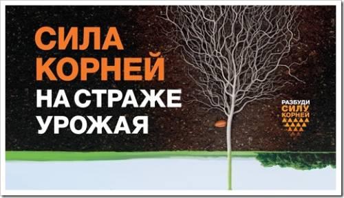 Принцип действия агрохимикатов Syngenta