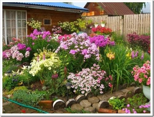 Когда сажают многолетние цветы для сада? Советы и рекомендации начинающим садоводам.
