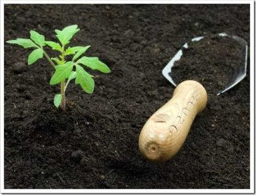 Как использовать плодородный грунт?