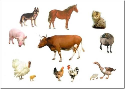 Премиксы для животных от компании