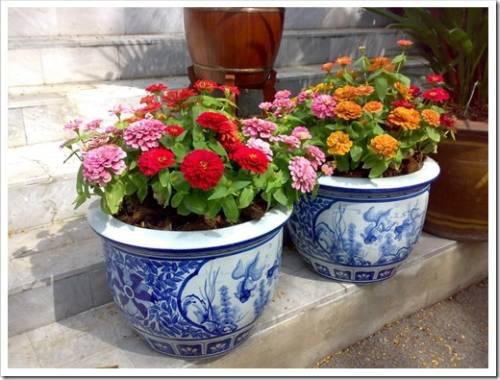 Растения для уличных вазонов