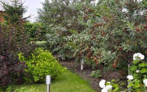 Интернет-магазин саженцев плодовых деревьев